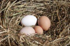Как купить домашние яйца
