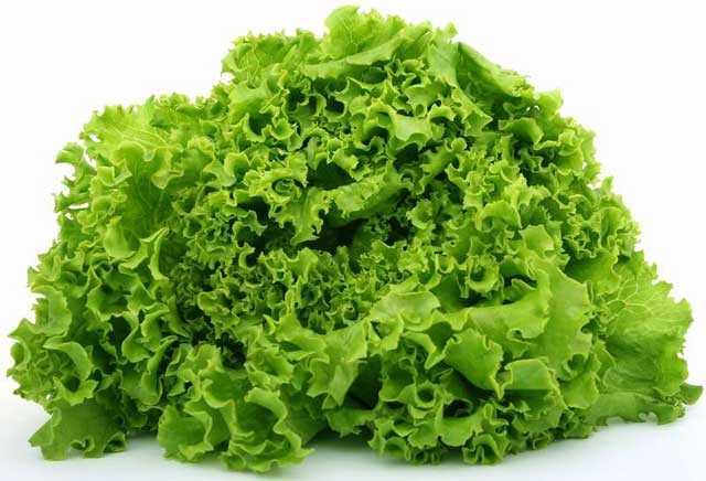 как заморозить салат на зиму