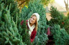 Какую елку выбрать на Новый год – живую или искусственную