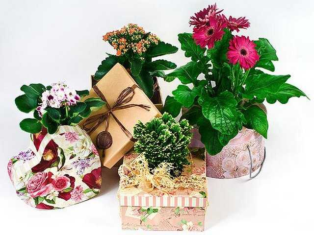 цветок в подарок