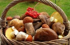 Грибные салаты для праздников и на каждый день, легко и просто!