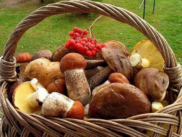 salaty s gribami - Грибные салаты для праздников и на каждый день, легко и просто!