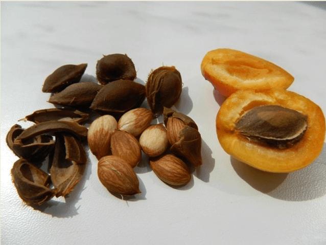 ядрышки абрикосов